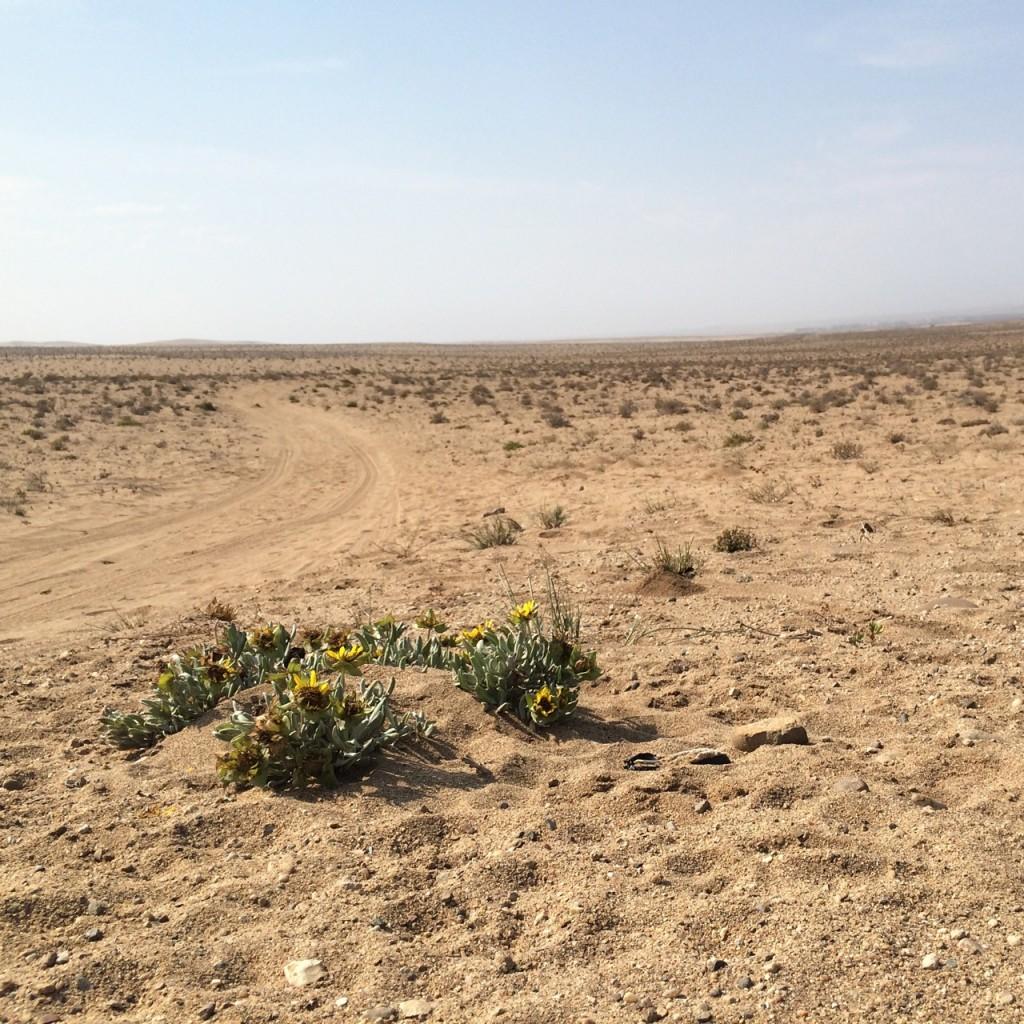 oranjemund sand dune